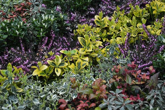 Small shrubs for containers