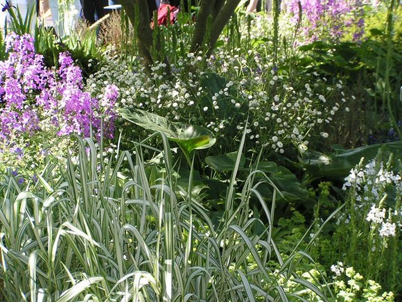 Grasses at Chelsea Flower Show 2016