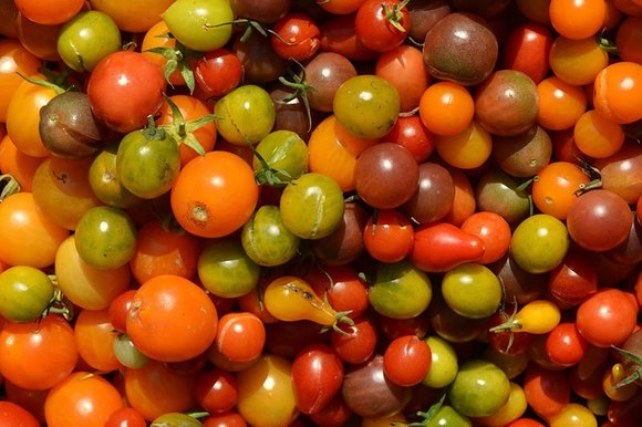 Multi-coloured cherry tomatoes