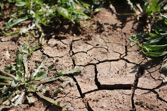 Weeds growing in dry cracked earth
