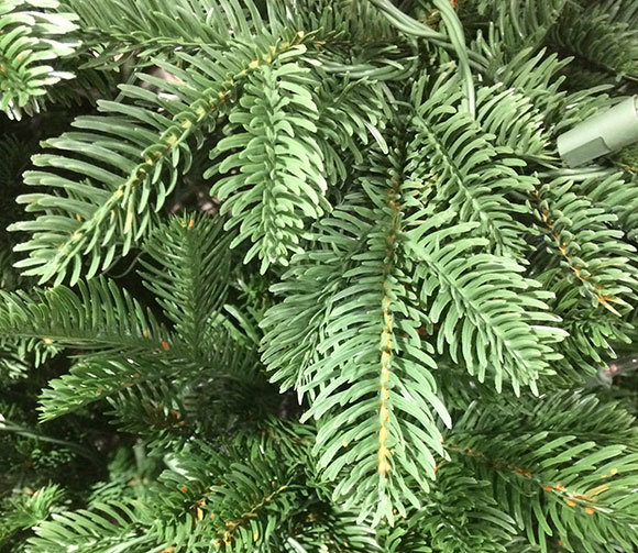 Empire Grande Fir