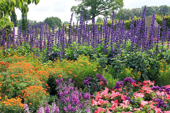English garden herbaceous border