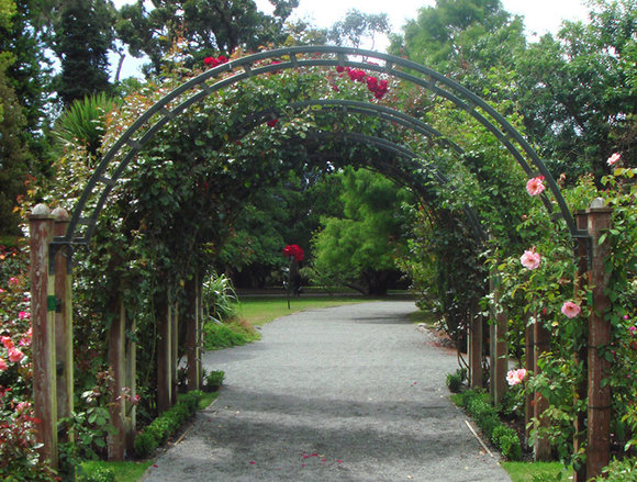 roses growing over a garden arch