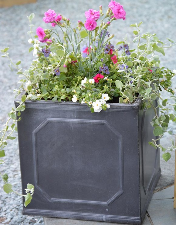 Container with summer bedding