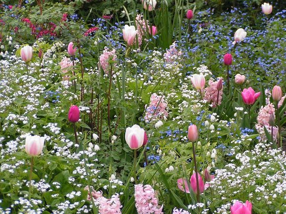 Tulips, Forget-me-nots and Hyacinth at Keukenhof Gardens
