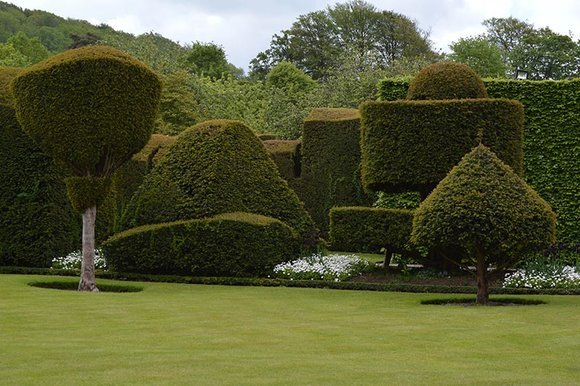Yew topiary at Levens Hall, Cumbria
