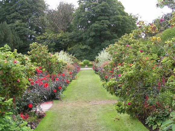Herbaceous borders at Levens Hall