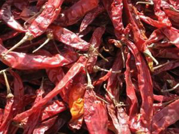 How To Grow Cracking Chillies | Hayes Garden World