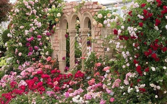 Peter Beales Roses stand at Chelsea Flower Show