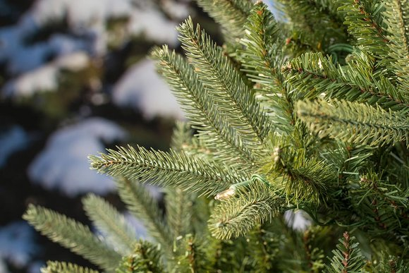 Washington Valley Spruce Artificial Christmas Tree
