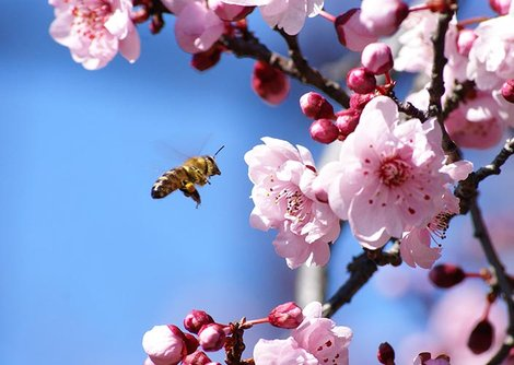 Protect our Honey Bees and insects