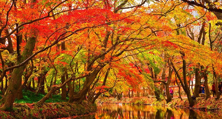 Trees and river showing autumn leaf colour