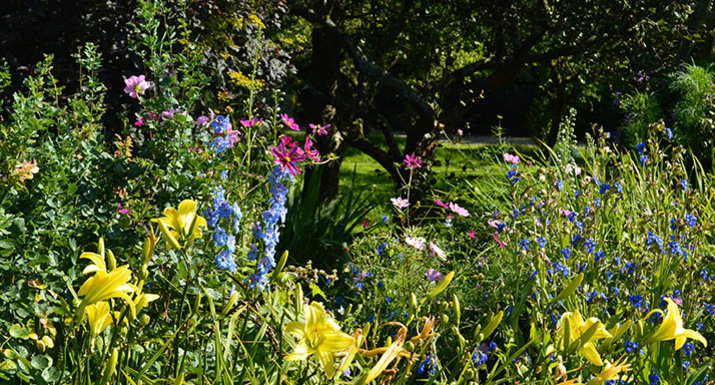 herbaceous border, Levens Hall, Cumbria