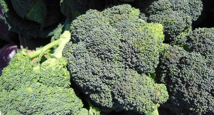 how to grow broccoli uk
