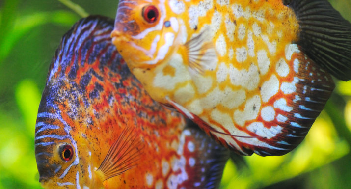 How to set up a tropical fish tank hayes garden world for Tropical fish temperature