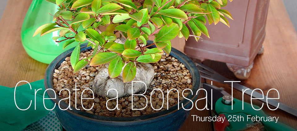 Create Your Own Bonsai Tree