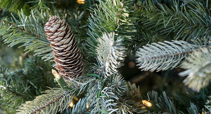 The Frosted Colorado Spruce Is An Ideal Wintery, Natural