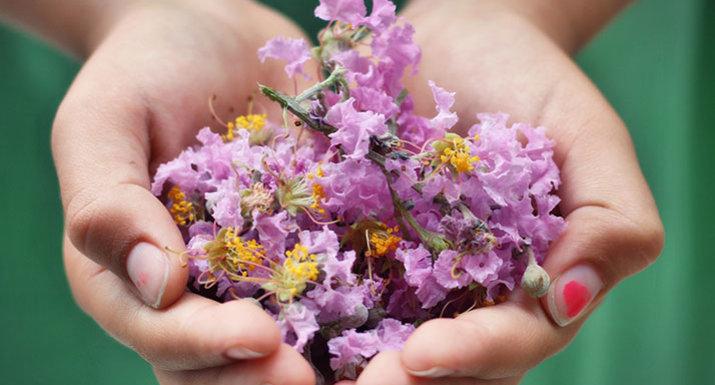 children's hands holding pink flower heads