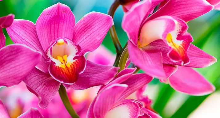 Orchid Day