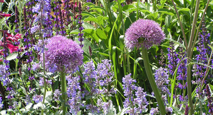 Herbaceous border in English cottage style garden