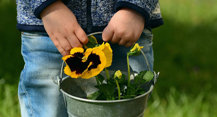 Child with pansy in a bucket