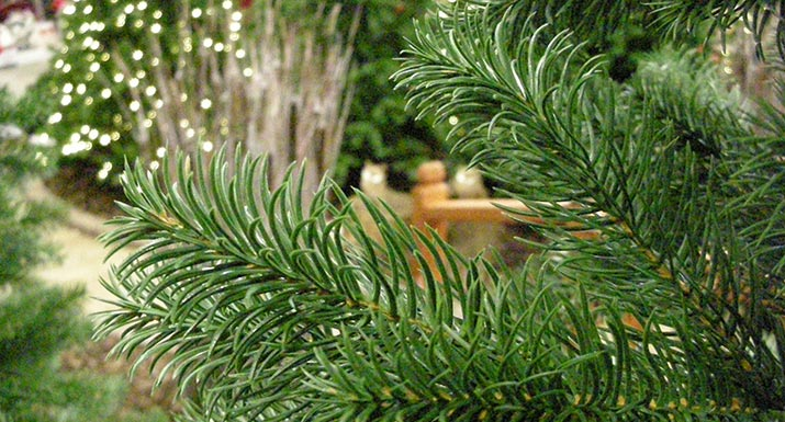 Artificial PE Christmas Trees