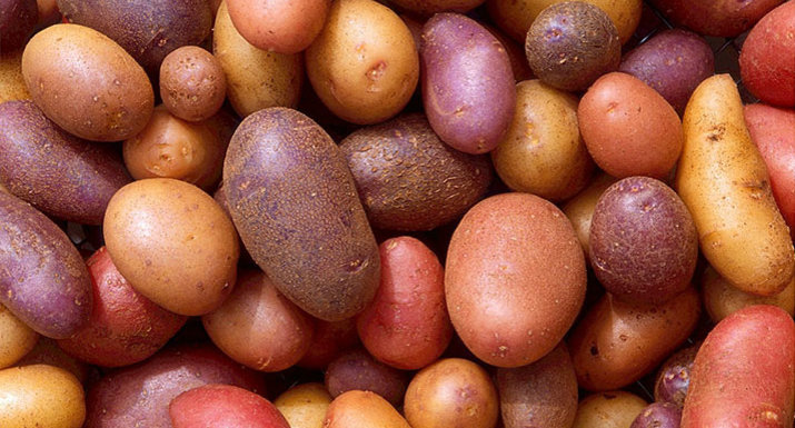 Multi-coloured potatoes