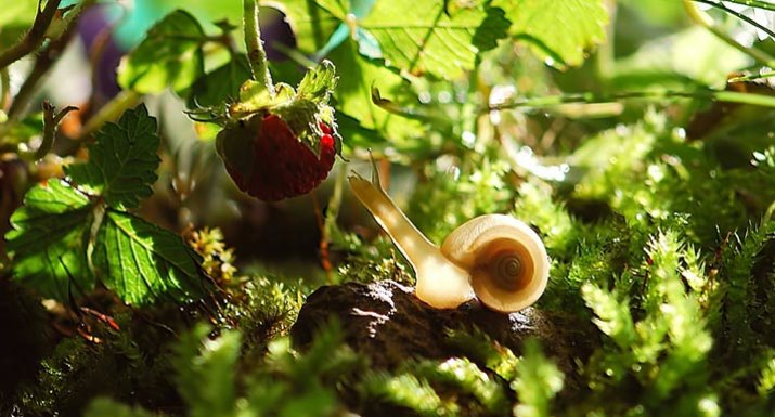 Follow our hints and tips to keep slugs and snails at bay in your ...