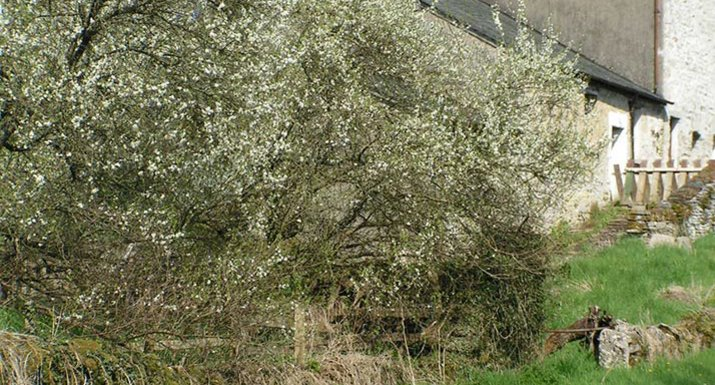Spring blossom in the Lyth Valley, Cumbria