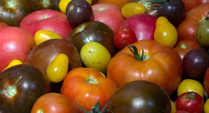 Various coloured tomatoes