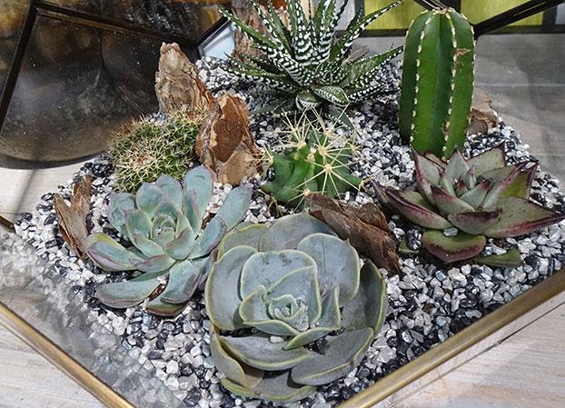 cacti & succulents planted in a terrarium