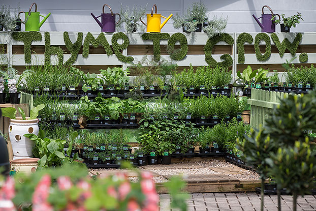 Herb plant display at Hayes Garden World