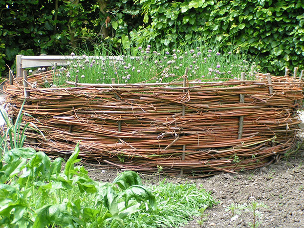 Chives growing in wicker raised bed at Sizergh Castle