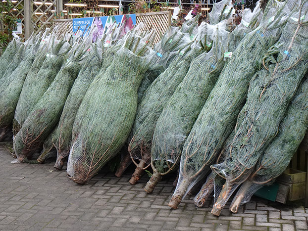 cut netted Christmas trees