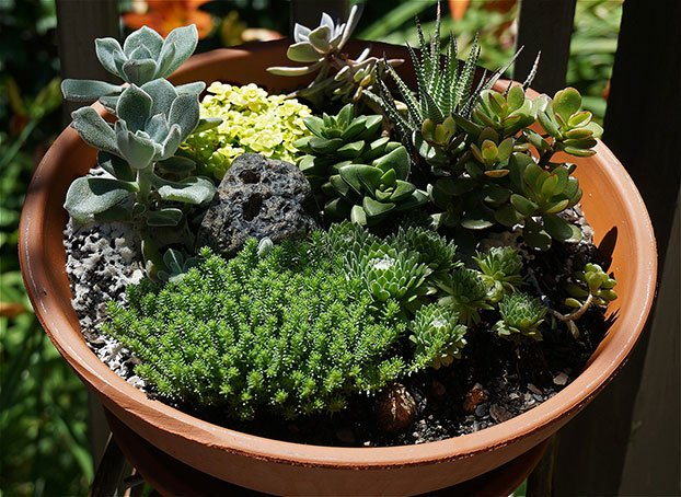 Cacti & succulant garden