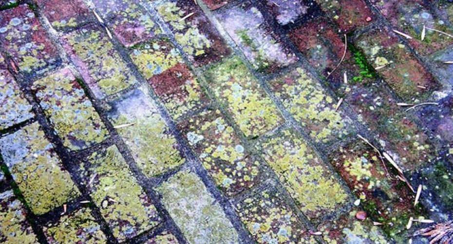Algae and weeds on brick paving