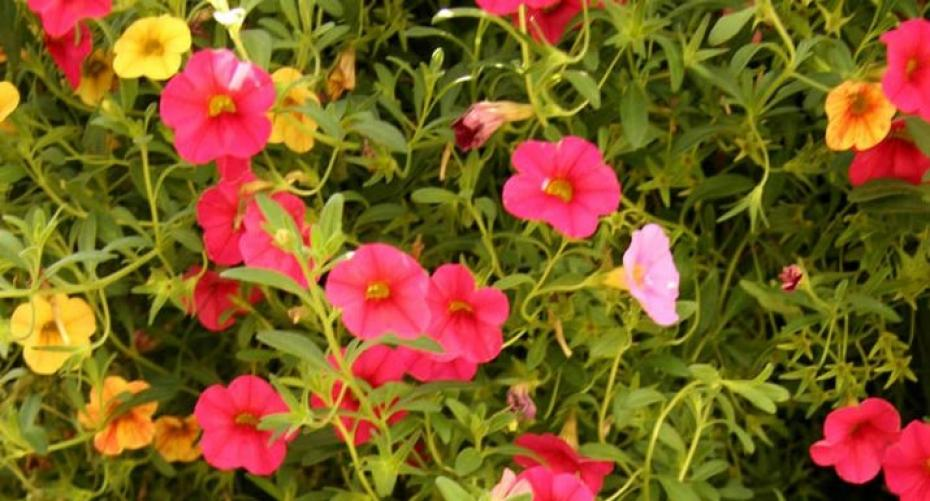 Best Summer Bedding Plants For Hanging, How Often Do You Feed Bedding Plants