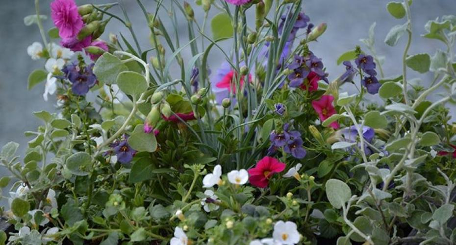 Zinc container planted with summer bedding plants