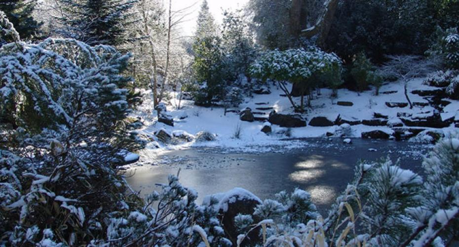 Garden pond in winter