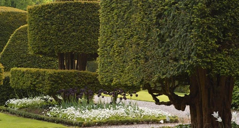 Topiary and tulips at Levens Hall, Cumbria