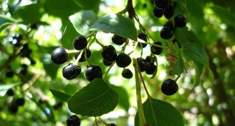 How To Grow Sensational Superberries Hayes Garden World