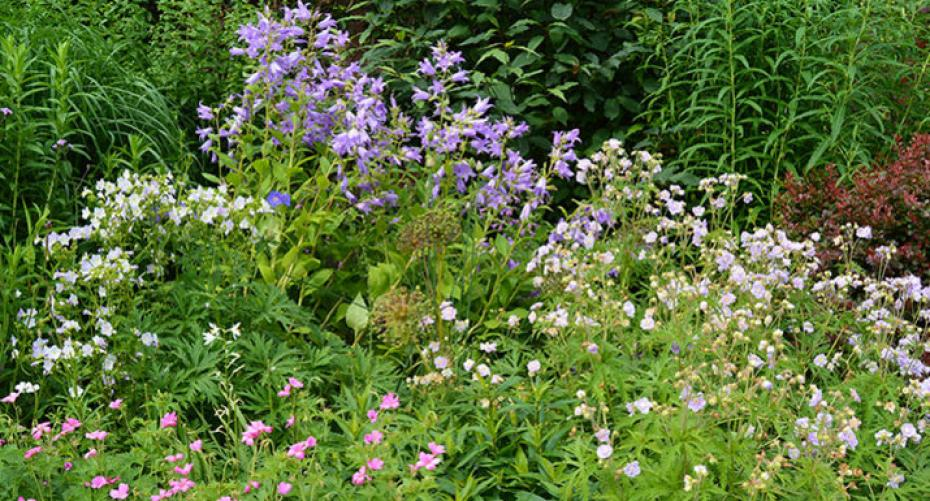 mixed herbaceous border at Holehird Gardens, Lakeland Horticultural Society