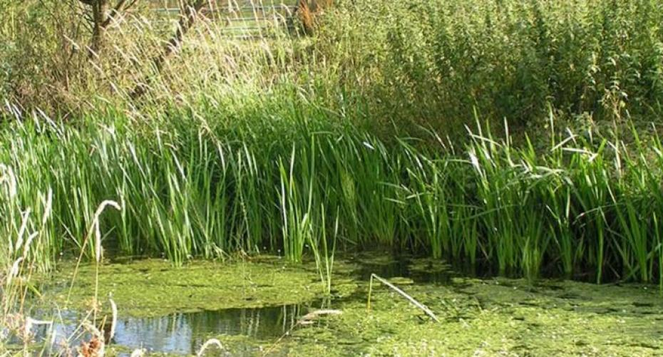 Wildlife pond with tiered vegetation