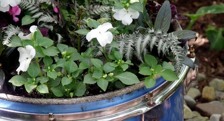 Bedding plants in an old metal drum