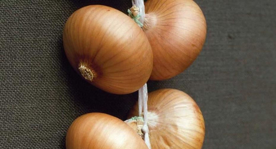 Onion 'Stuttgarter Giant'