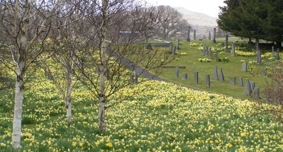 Daffodils at Troutbeck Church, near Windermere