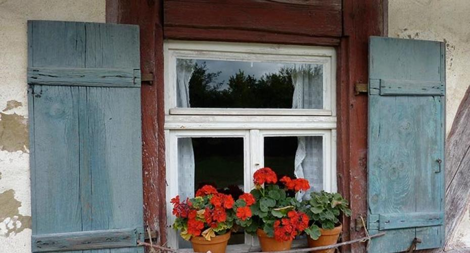 Window with red geraniums