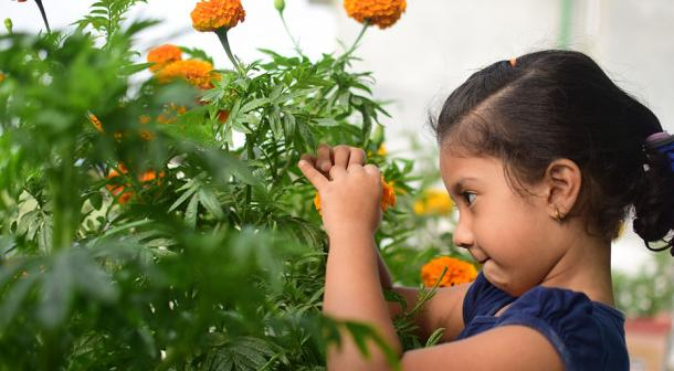child looking at marigolds