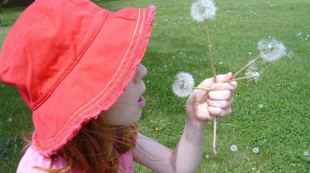 child making a wish wit a dandelion