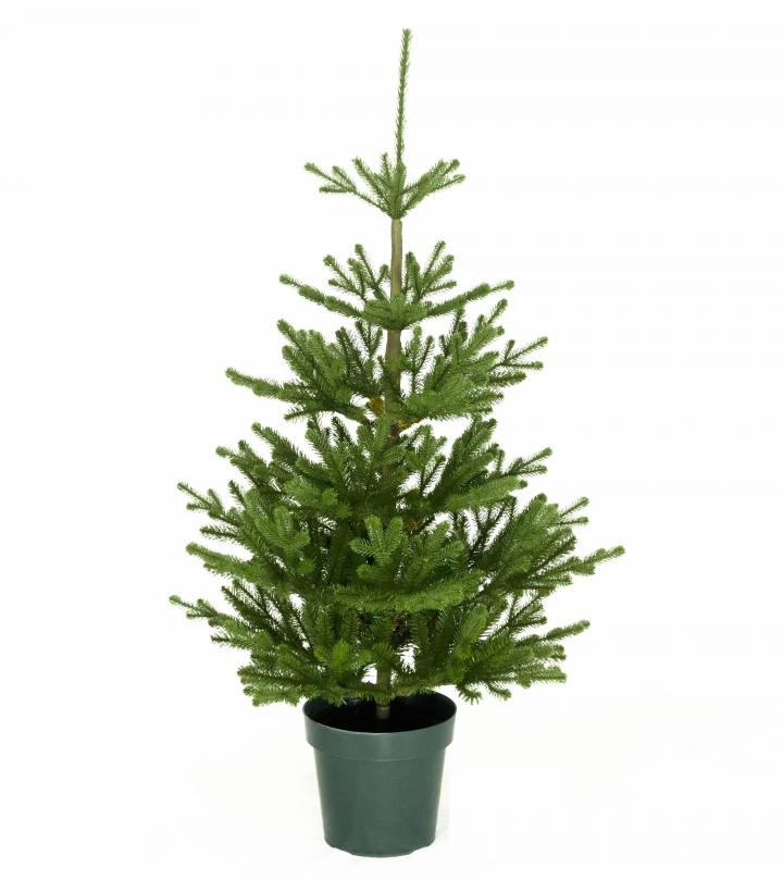 Potted Artificial Christmas Tree: 4ft Imperial Spruce Potted Feel-Real Artificial Christmas